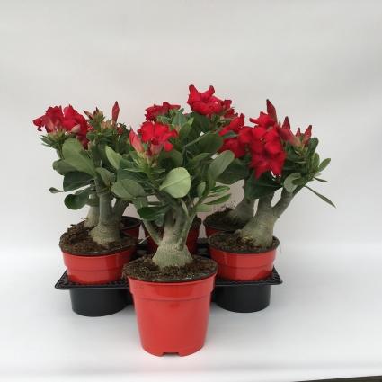 Plantas ornamentales posibilidades para crecer coexphal for Produccion de plantas ornamentales